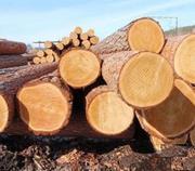 Предлагает к продаже лес - кругляк из России регионов Сибири